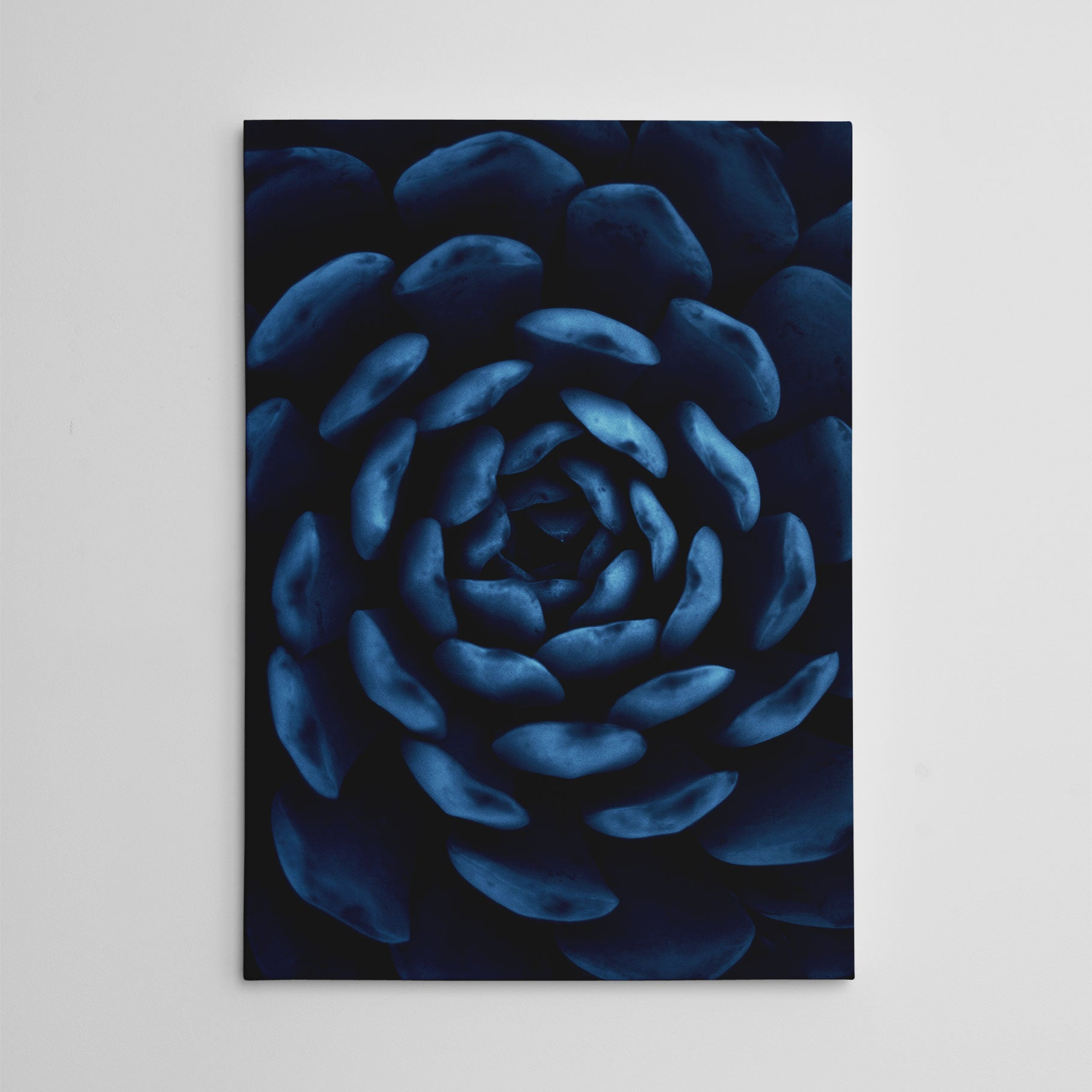 Botanical photography canvas print, with a blue succulent plant close-up.