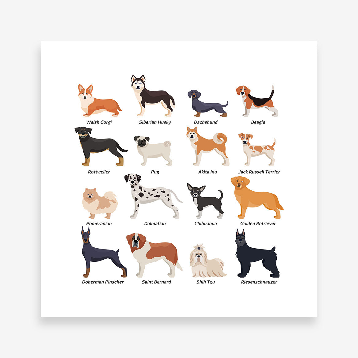 Square poster print with dog breeds name and images 3