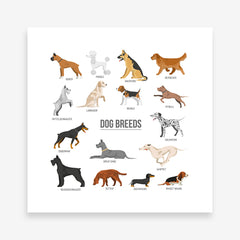 Square poster print with dog breeds name and images