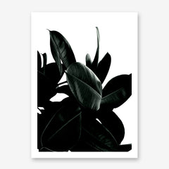 Photography poster print by Kubistika, with dark green Ficus leaves, on white background.