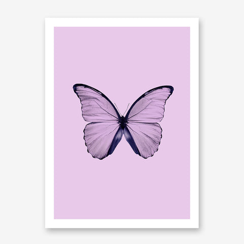 Beautiful dusty pink butterfly poster print on pink background