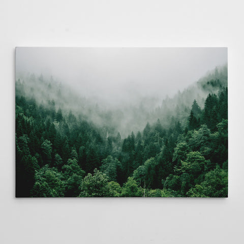 Canvas print with coniferous forest covered with fog