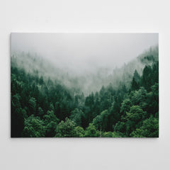 Canvas print with breathtaking green coniferous mountain forest covered in fog