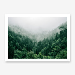 Poster print with breathtaking green coniferous mountain forest covered in fog.