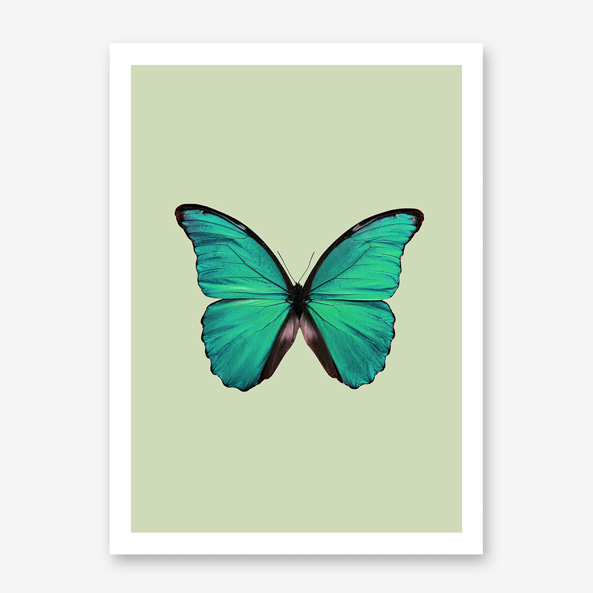 Gorgeous poster print with a green butterfly and background.