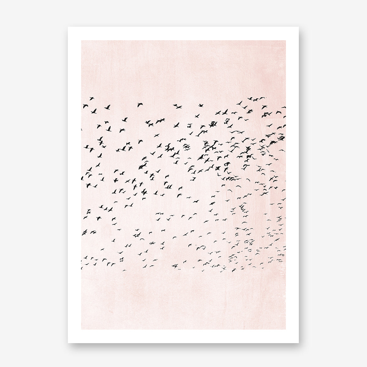 Illustration print by Kubistika, with black birds, on pink background.