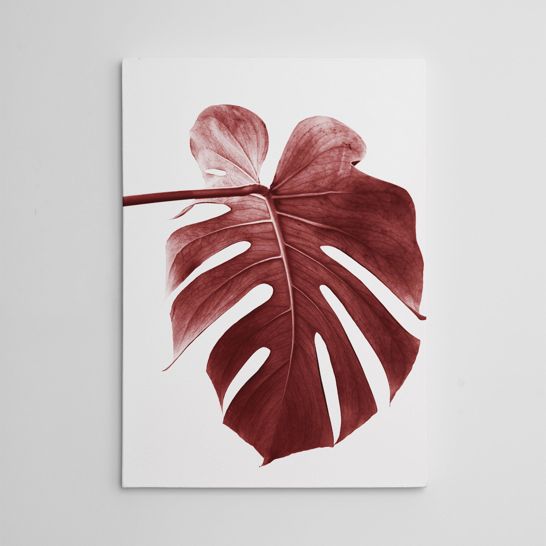 Nature inspired canvas print, with a pale red leaf, on white background.