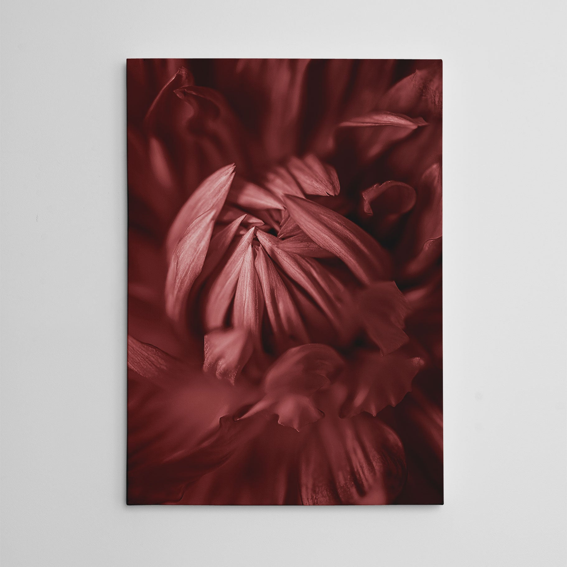 Nature inspired canvas print, with a pale red blooming flower close-up