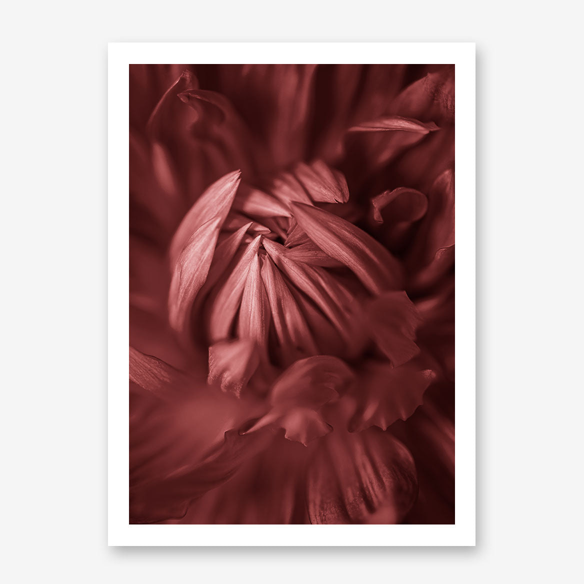 Nature inspired poster print, with a pale red blooming flower close-up.