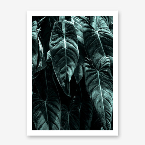 Photography poster print by Kubistika, with large green leaves.
