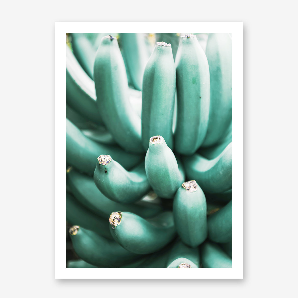 Photography poster print with a bunch of green bananas.