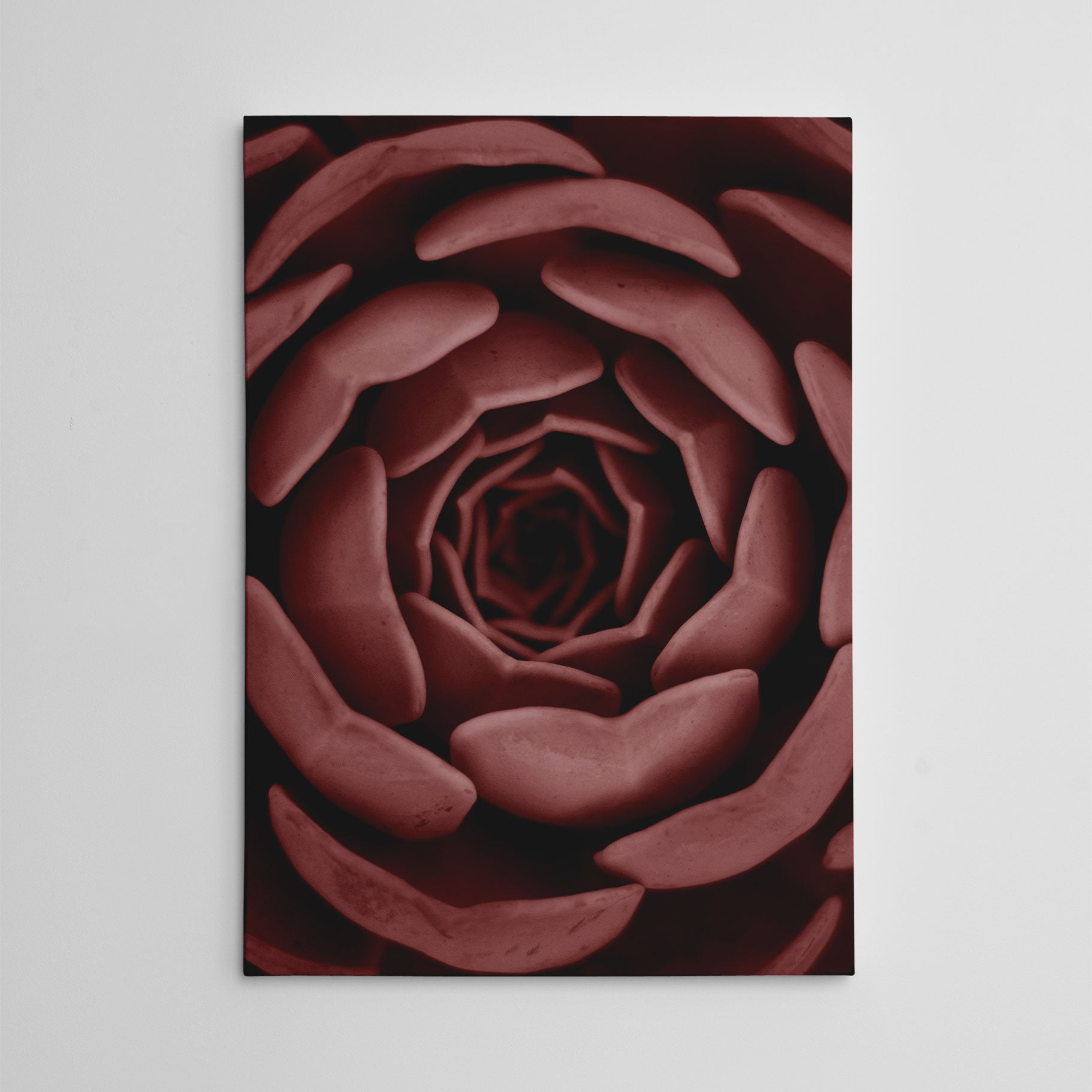 Nature inspired canvas print, with a pale red succulent plant close-up.