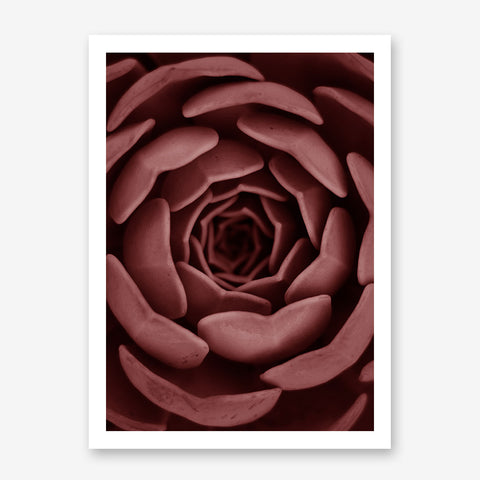Nature inspired poster print, with a pale red succulent plant close-up.