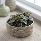 large ceramic plant bowl