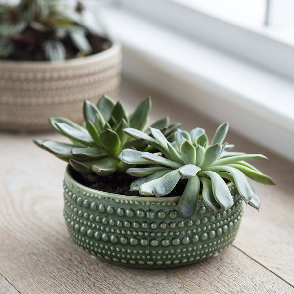 green ceramic plant bowl