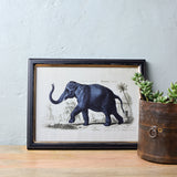 framed elephant print detail