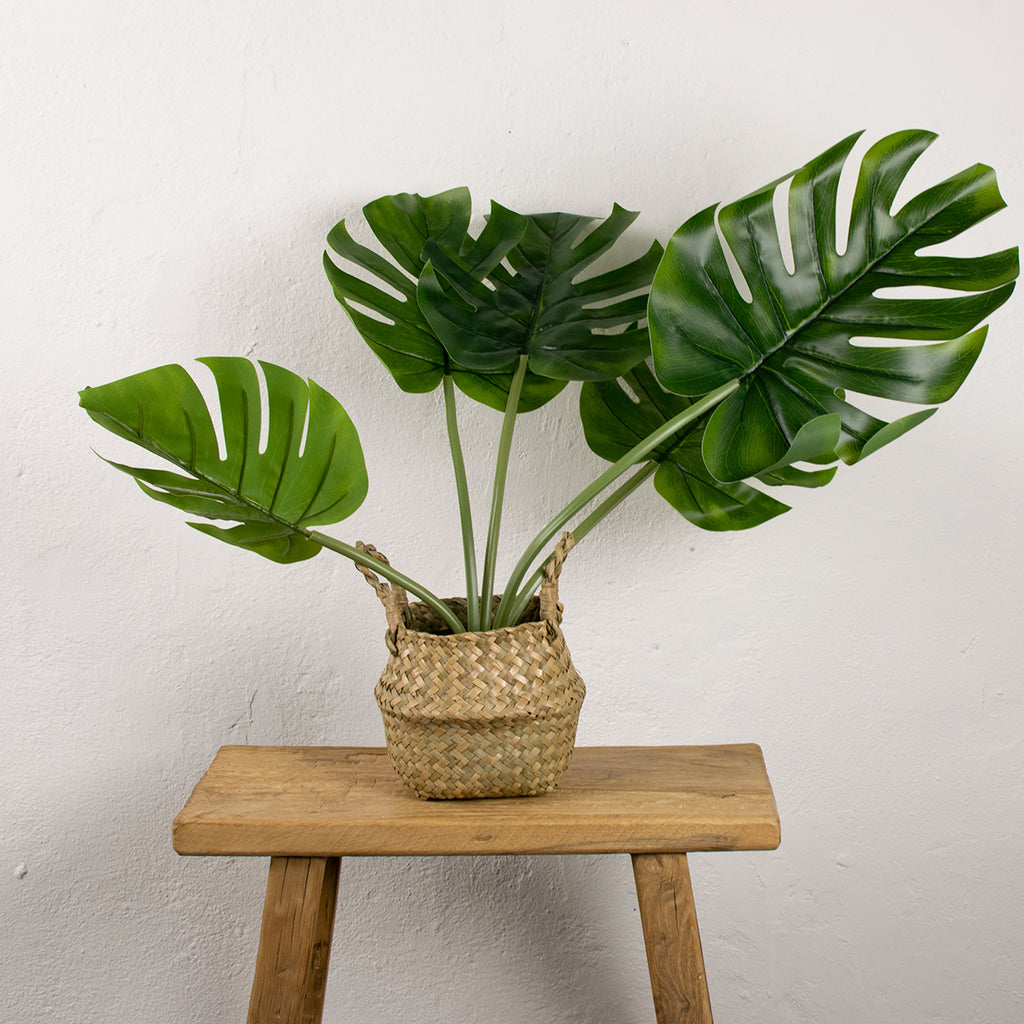 faux cheese plant in rattan basket