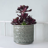 grey daisy planter