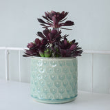 pastel blue daisy planter
