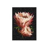 pink protea poster print close up