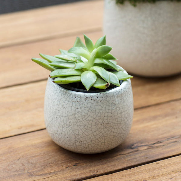 ceramic crackle glaze planter
