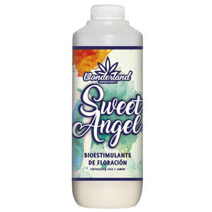 Sweet Angel - Wonderland