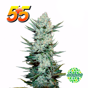 Tangie´Matic Auto 5+5