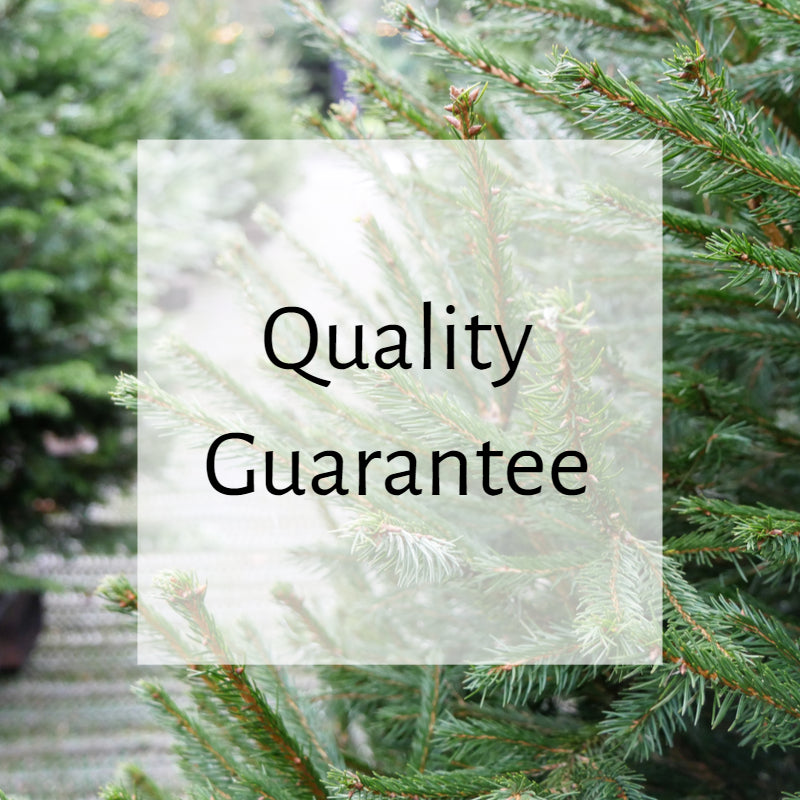 Our Christmas Tree Guarantee