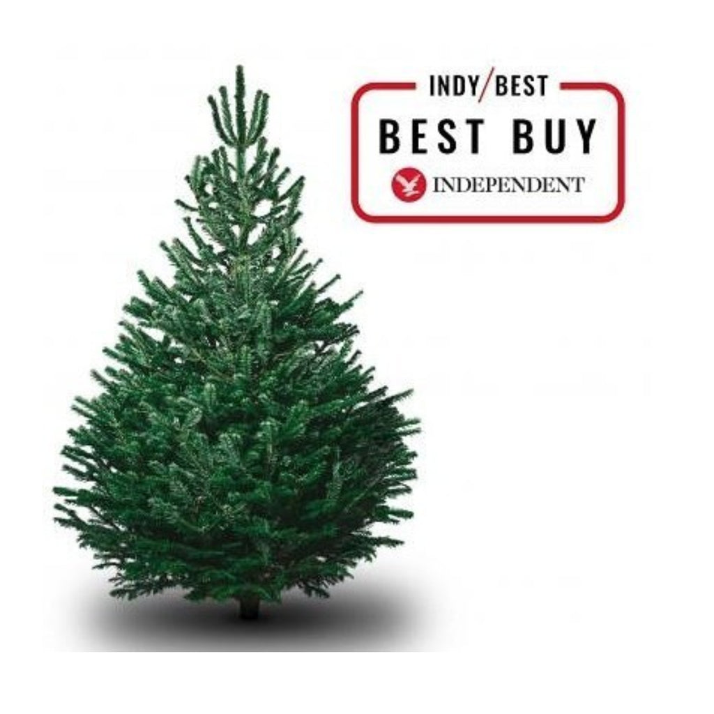 Voted Best Christmas Trees!