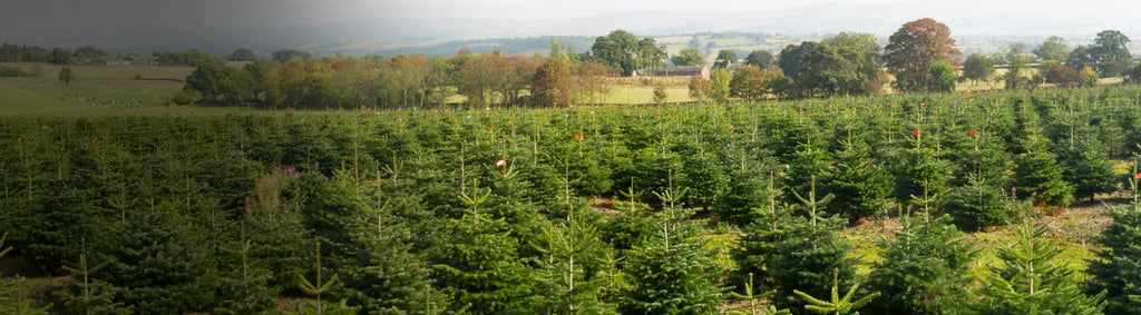 What's happening at the North Pole Tree Farm?
