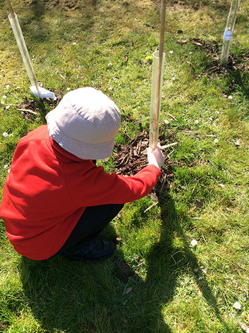 Young Tree Planters at Work