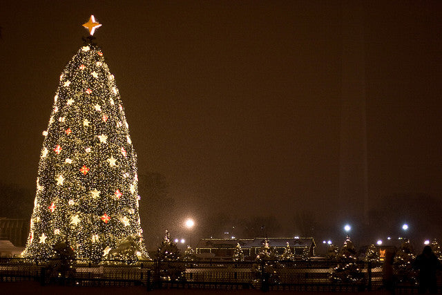 The Whitehouse Christmas Tree with Pines and Needles