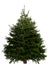 10ft Nordmann Fir Christmas Tree from Pines and Needles