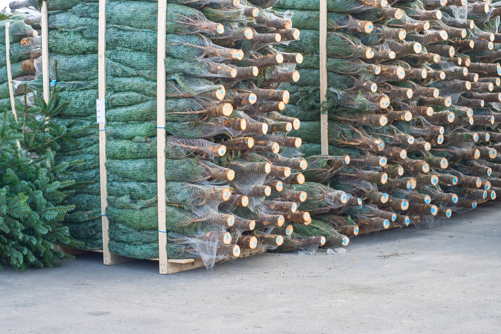 Quality Christmas Trees available for wholesale