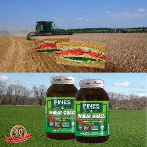 Gluten Free WheatGrass and Green Superfoods from Pines