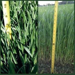 Kohler's Seminal Research on Stage of Growth for Cereal Grass