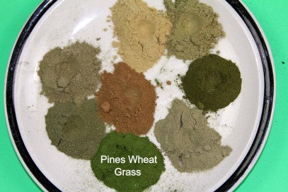 Compare Pines with Other Cereal Grass products