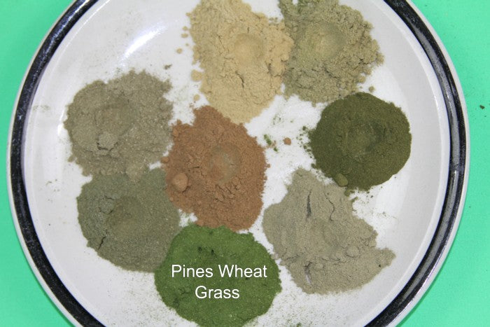 Comparison of True Wheat Grass powder with Flag Grass Powders for website
