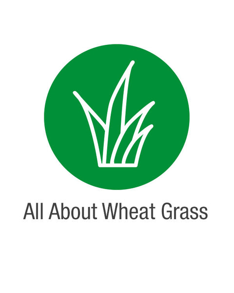 All About Wheat Grass