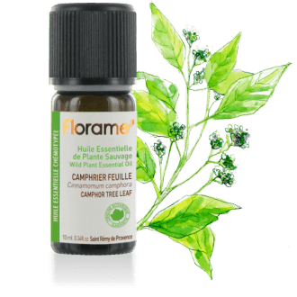 Camphor Tree (leaf) Wild Essential oil, 10 ml