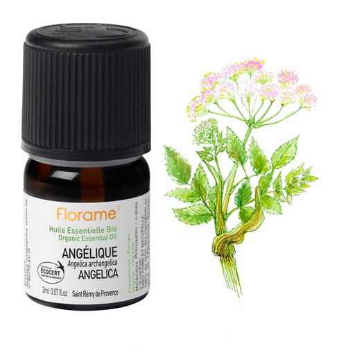 Organic Angelica essential oil, 2 ml