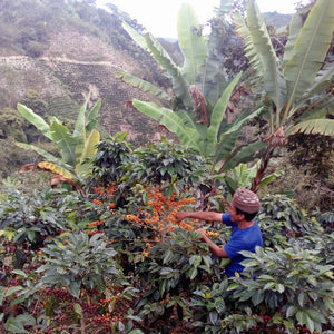 Where Does Coffee Come From? Part 2- The Farm and Mill