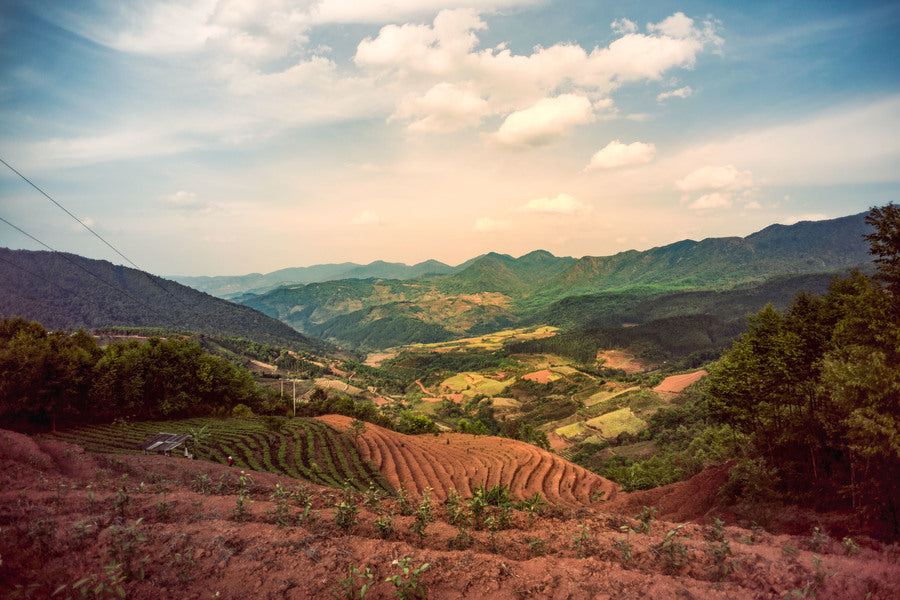 Yunnan hillside with rows of coffee farms green and brown