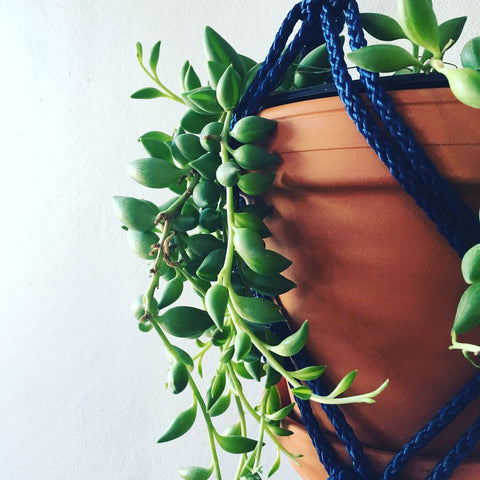 Blue Hanging Macrame with Plant
