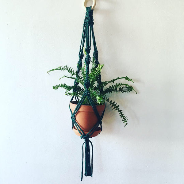 Green Hanging Macrame with Plant