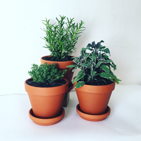Potted Herb Subscription