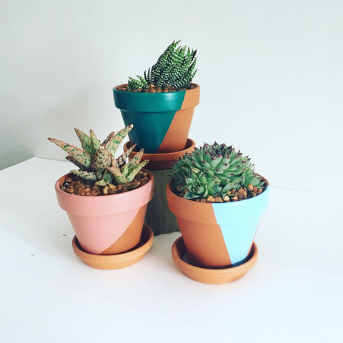 Naked Geometric Pot Trio with Succulents