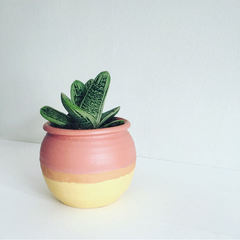 Potbelly Pot with Succulent