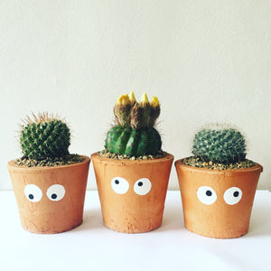 Potted Cact-Eye Trio