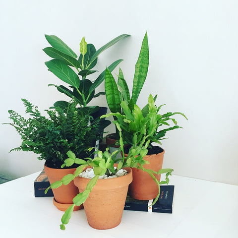 Potted Indoor Plant Subscription